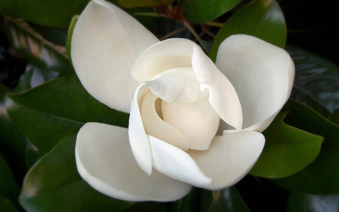 Unfolding our Petals